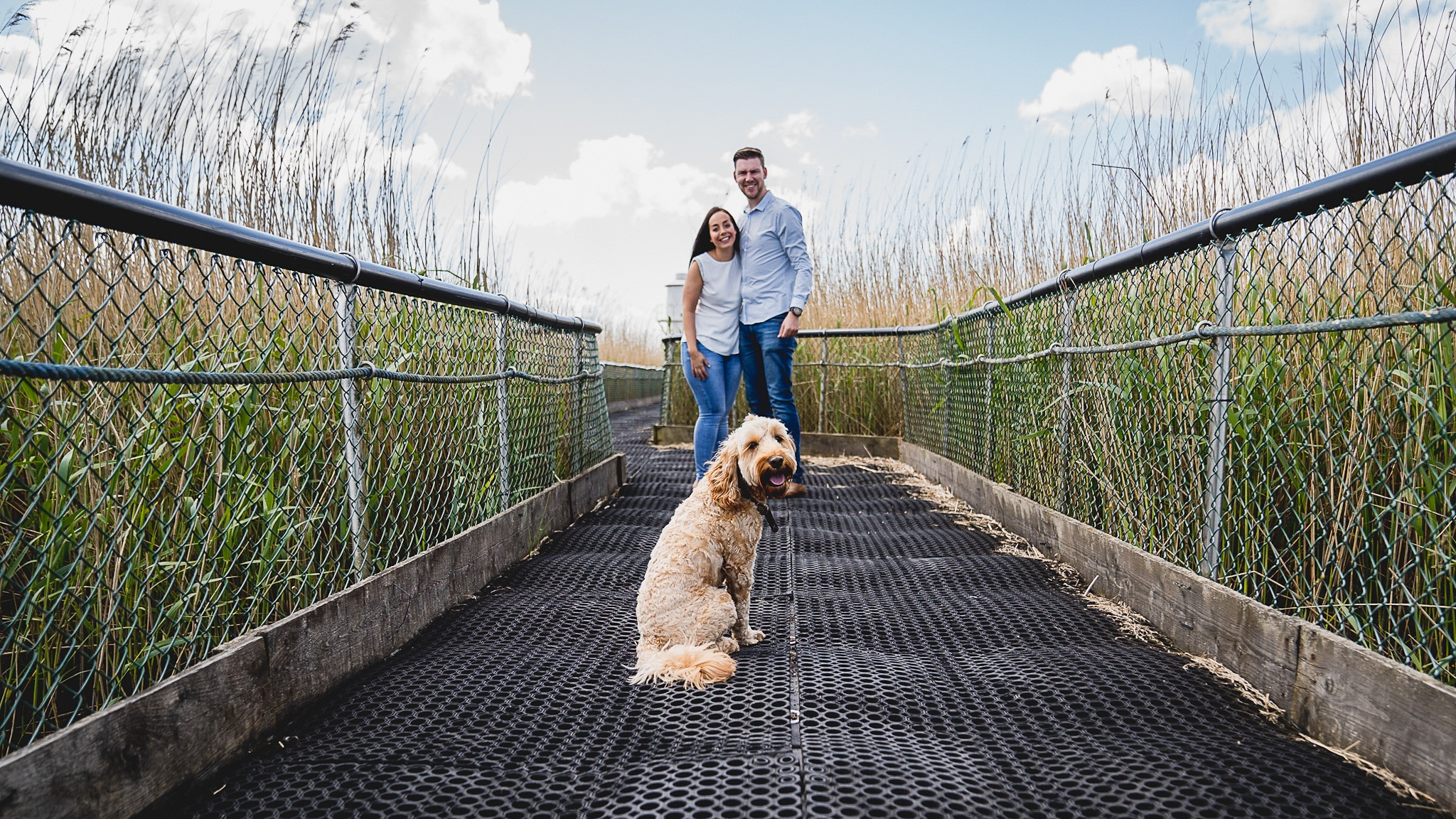 Bringing dogs to pre-wedding photo shoot